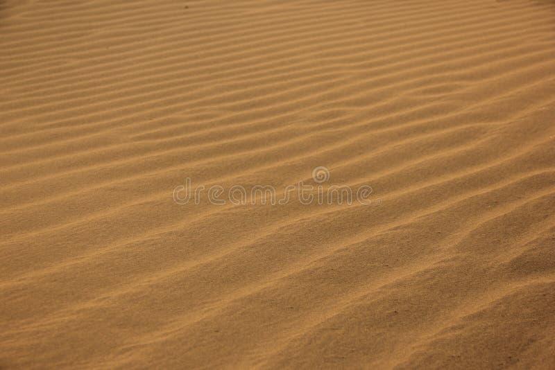 Pluskocz?cy piasek w pustyni obrazy royalty free