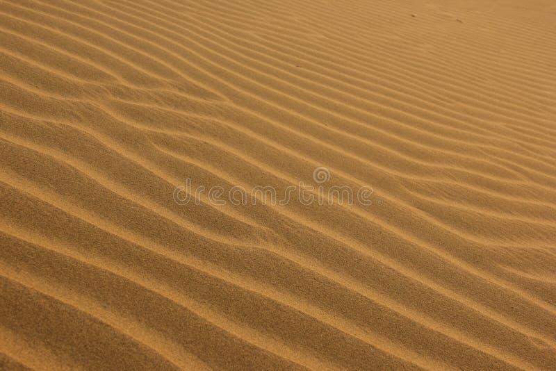 Pluskocz?cy piasek w pustyni obraz royalty free