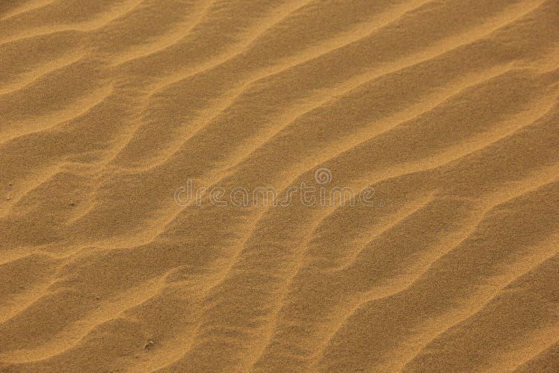 Pluskocz?cy piasek w pustyni zdjęcia royalty free