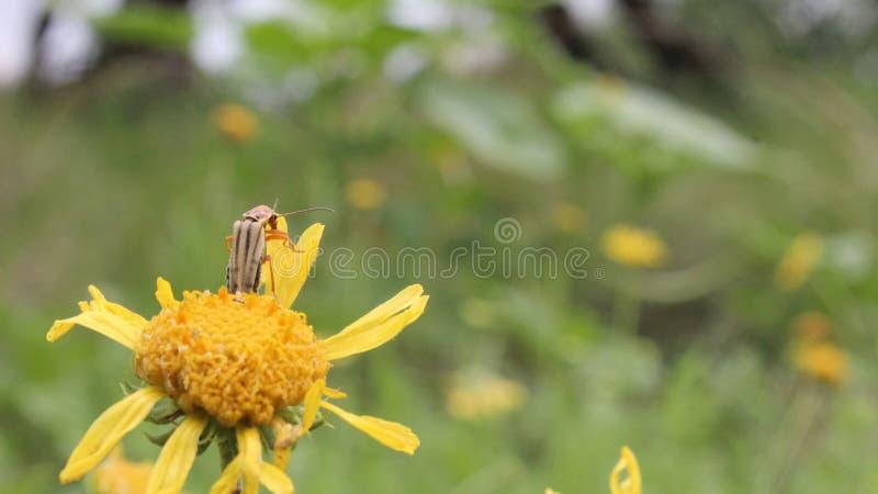 Pluskwa na kwiacie obserwuje krajobraz zdjęcie royalty free