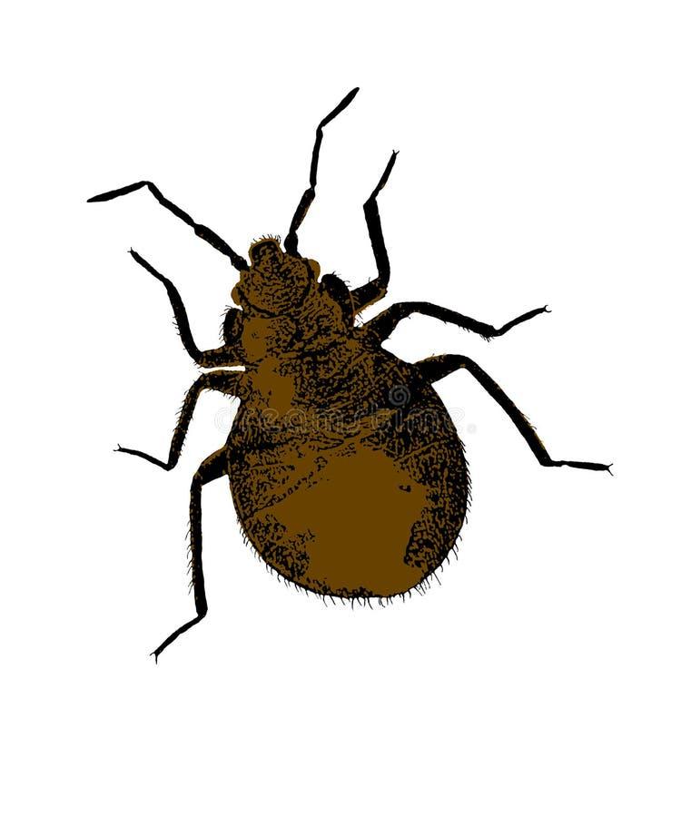 pluskwy czarny brąz wektor ilustracji