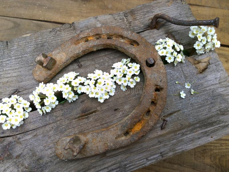 Ply horseshoe with flowers on wooden background. Close-up royalty free stock photos