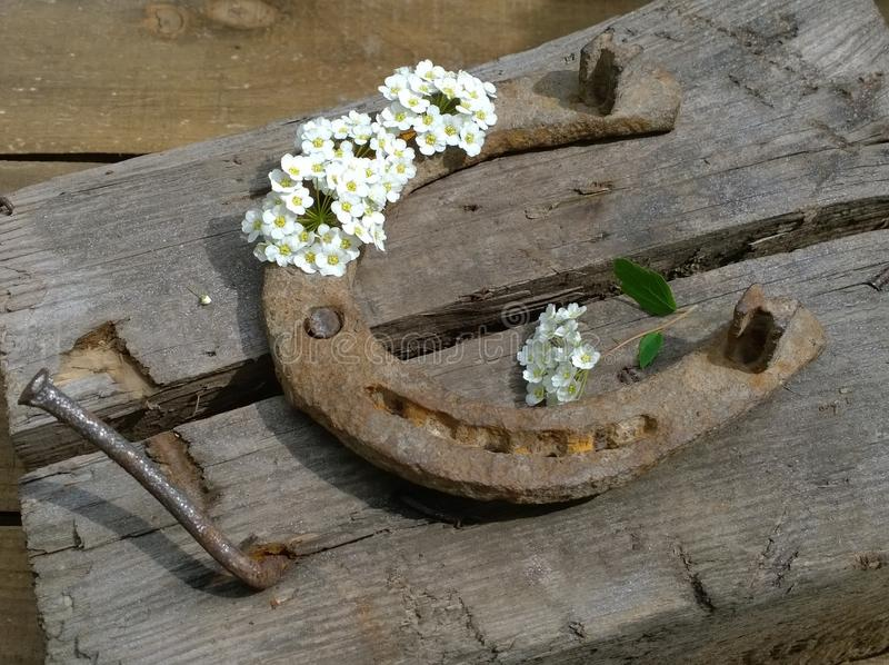 Ply horseshoe with flowers on wooden background. Close-up royalty free stock photo