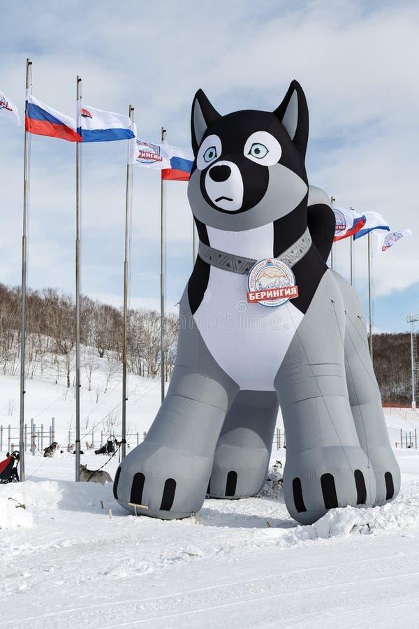 Pneumatyczna postać łuskowaty sanie pies - symbol tradycyjna Kamchatka sania psa rasa Beringia fotografia royalty free