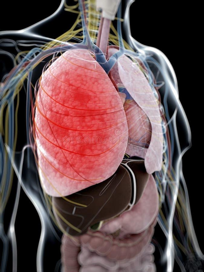 Pneumonia ilustração do vetor