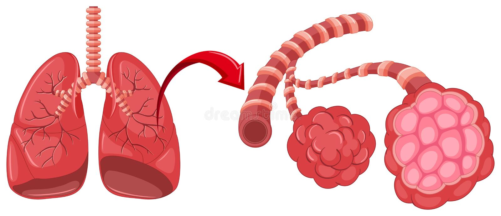 Pneumonia diagram with zoom in lungs. Illustration stock illustration