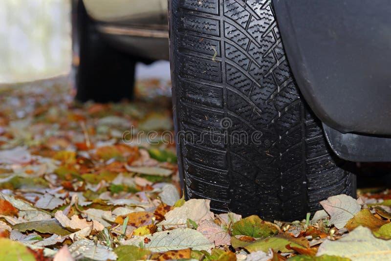 Pneus d'hiver pour l'automne et l'hiver Pneus d'hiver pour le feuillage glissant humide photos stock
