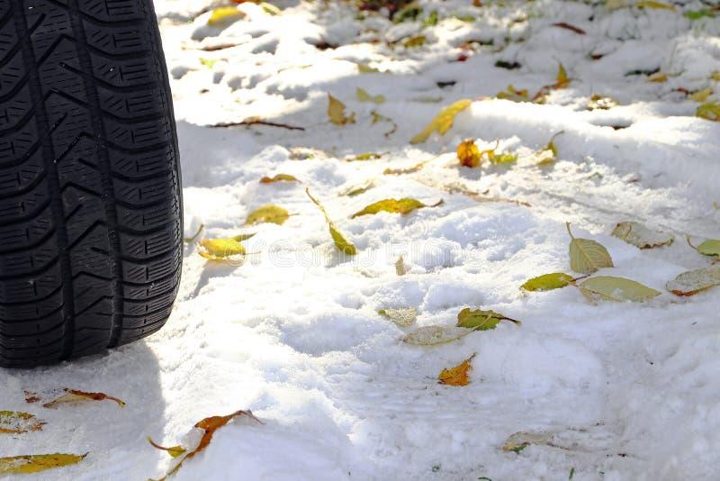 Pneus d'hiver pour les feuilles et la neige image libre de droits