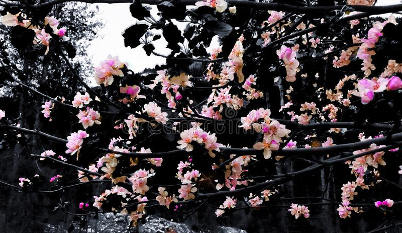 PNF floral imagem de stock royalty free