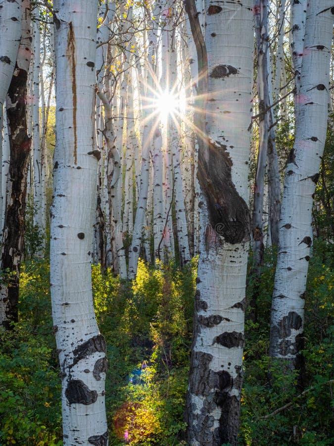 Pnie drzew zdjęcie stock