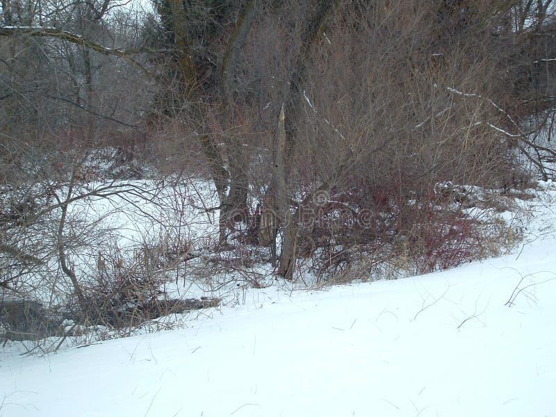 Pnond gelé avec des arbres autour de lui photographie stock libre de droits