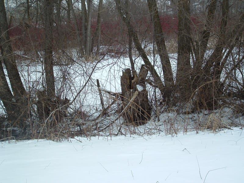 Pnond gelé avec des arbres autour de lui image stock