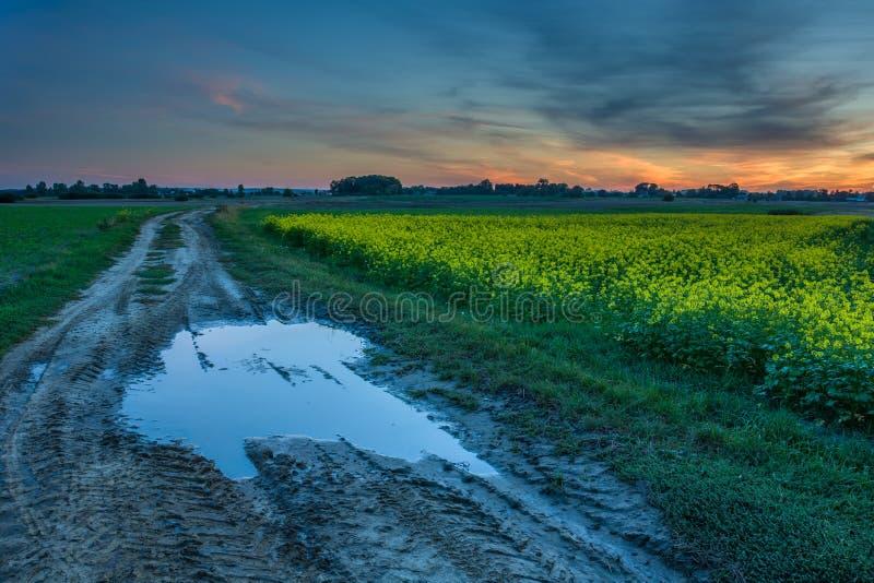 Poça na estrada de terra, no campo da violação e nas nuvens após o por do sol foto de stock royalty free