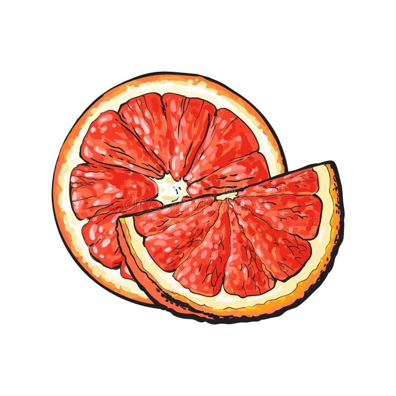 Połówka i ćwiartka dojrzały różowy grapefruitowy, ręka rysująca ilustracja ilustracja wektor