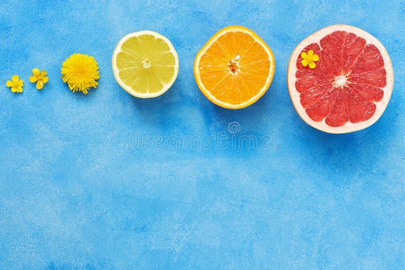 Połówki cytrus owoc na błękitnym tle z rzędu Pomarańcze, cytryny, grapefruitowych i małych żółci kwiaty jaskier, Widok f obraz stock