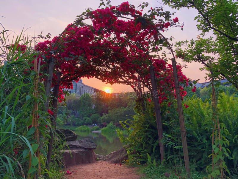Położenia Słońce zdjęcie royalty free