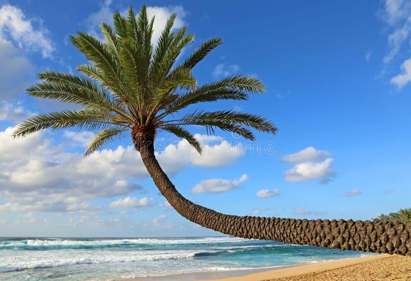 Połogi drzewko palmowe zdjęcia royalty free