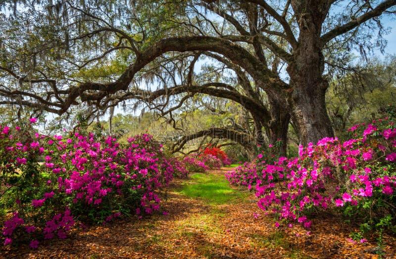 Południowa Karolina wiosna Kwitnie Charleston SC Lowcountry Sceniczny fotografia royalty free