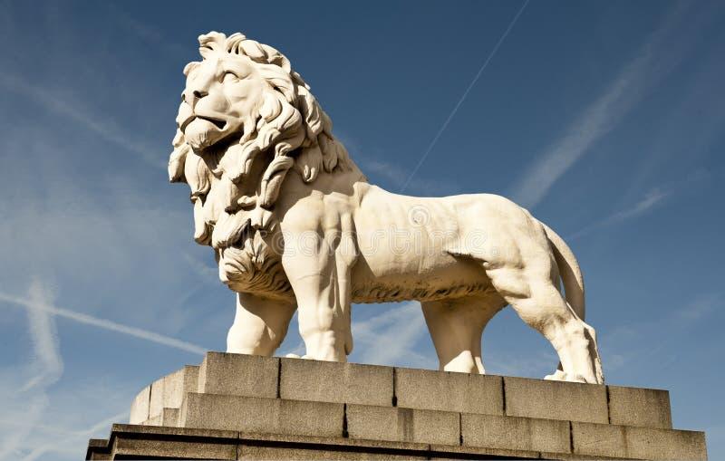 Południowy banka lew zdjęcia royalty free