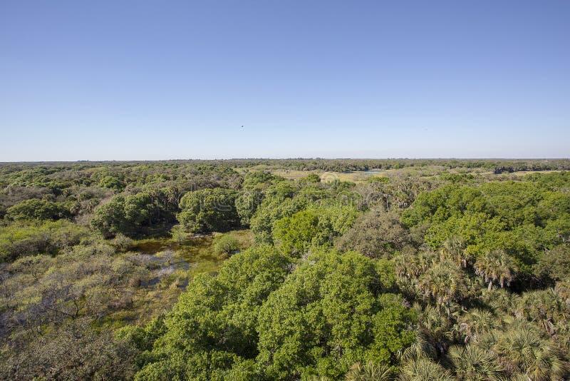 Południowy Floryda Sosnowy Flatwoods I bagna fotografia royalty free