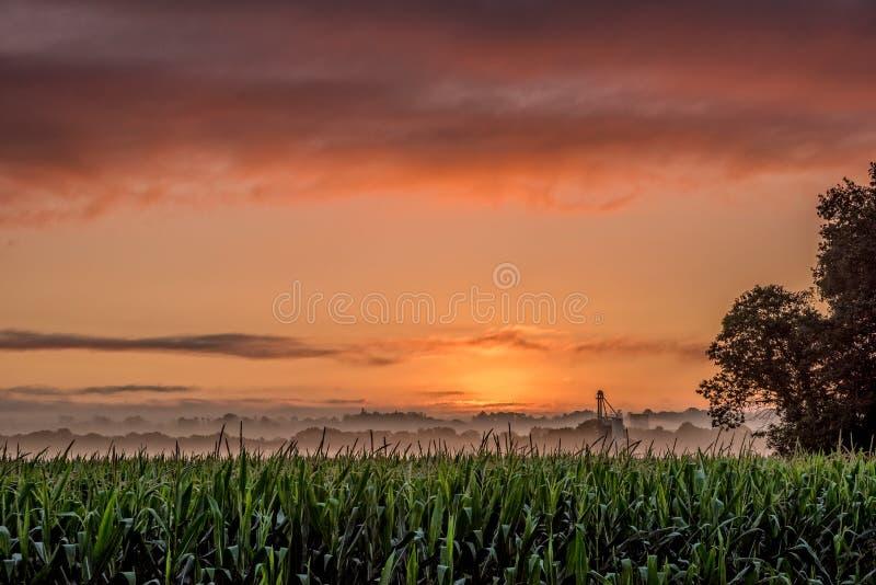 Południowy Francja słońca wzrost przy śniadaniem obrazy royalty free