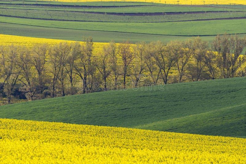 Południowy Moravia krajobraz, ziemia uprawna w wiośnie z rapeseed i obrazy royalty free