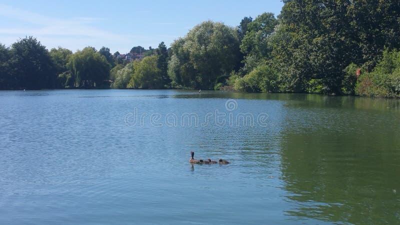 Południowy Norwood jezioro zdjęcie royalty free