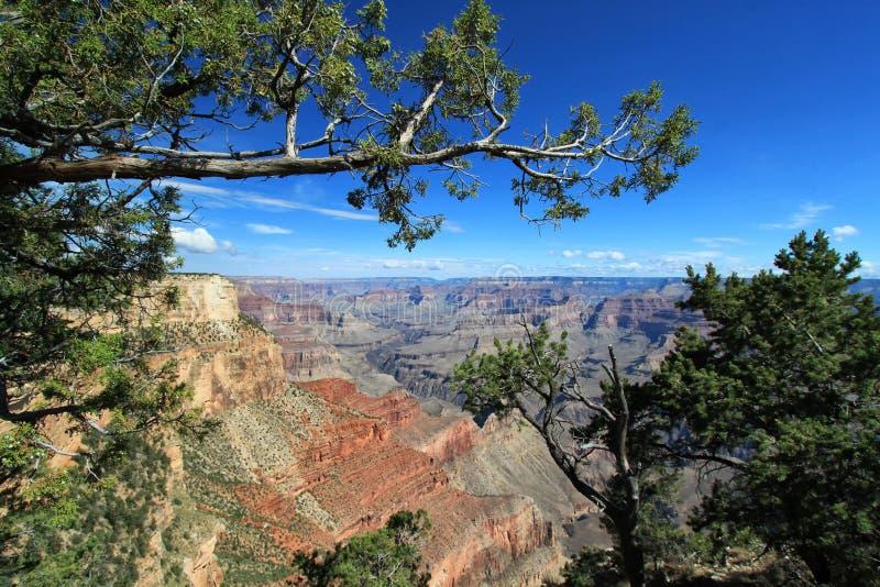 Południowy obręcz Arizona - Grand Canyon park narodowy - obrazy royalty free
