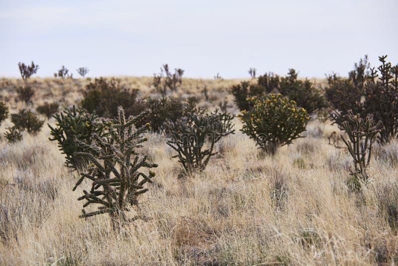 Południowy zachód pustyni krajobraz zdjęcie stock