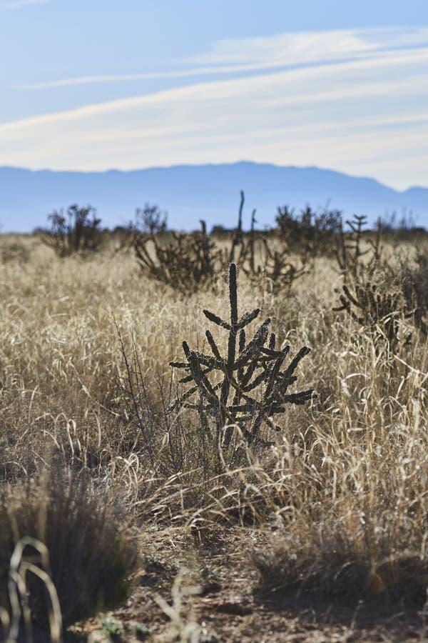 Południowy zachód pustyni krajobraz zdjęcia royalty free