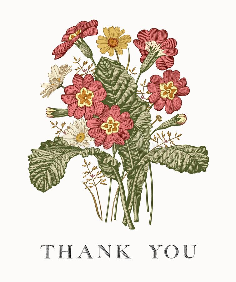 Poślubiać dzięki i zaproszenie Chamomile kwiatów prÃmula karcianej ramy rytownictwa wiktoriański Piękna realistyczna Wektorowa il royalty ilustracja