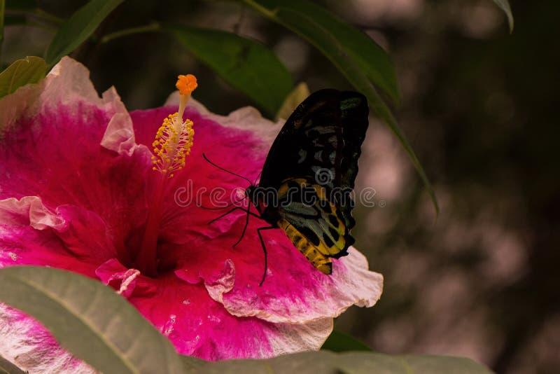 Poślubnika kwiat z motylem zdjęcia stock