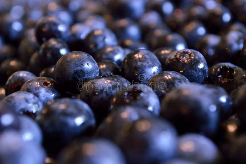 Poświadczać organicznie czarne jagody, zbliżenie zdjęcia stock
