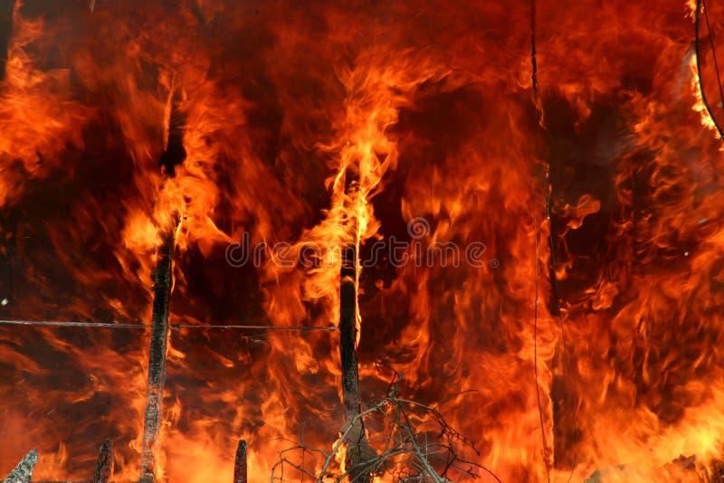 pożar lasu fotografia stock