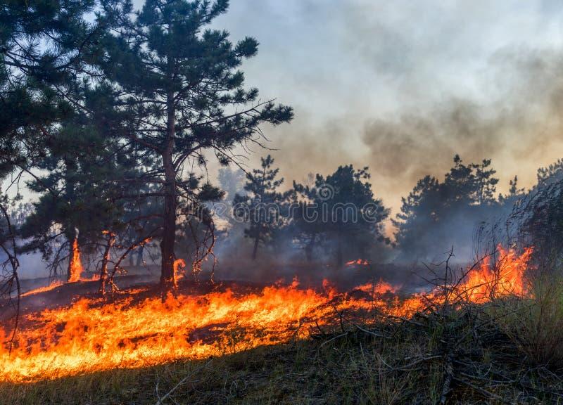 Pożar Lasu Palący drzewa po pożaru, zanieczyszczenia i mnóstwo dymu, obraz stock