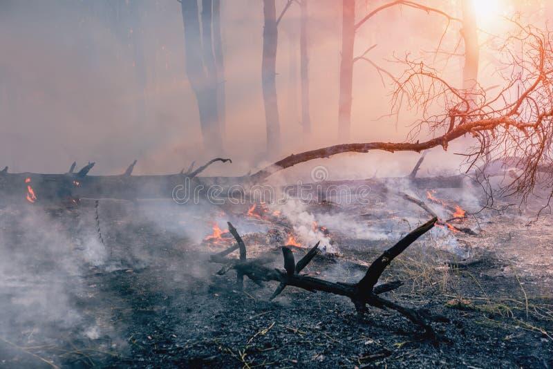 Pożar Lasu spadać drzewo pali ziemia mnóstwo dym gdy pożar obrazy stock