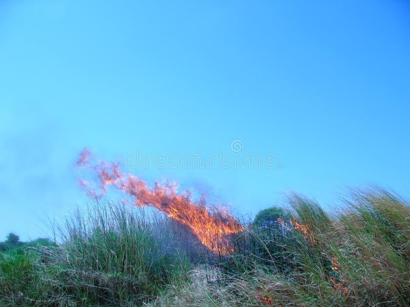 pożarnicza trawa fotografia royalty free