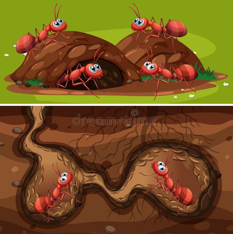 Pożarnicze mrówki w gniazdeczku royalty ilustracja