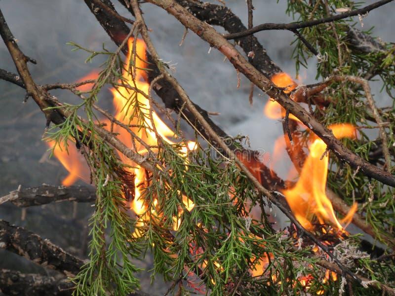 Pożaru lasu zbliżenie lub makro- płomienie i dym zdjęcie stock