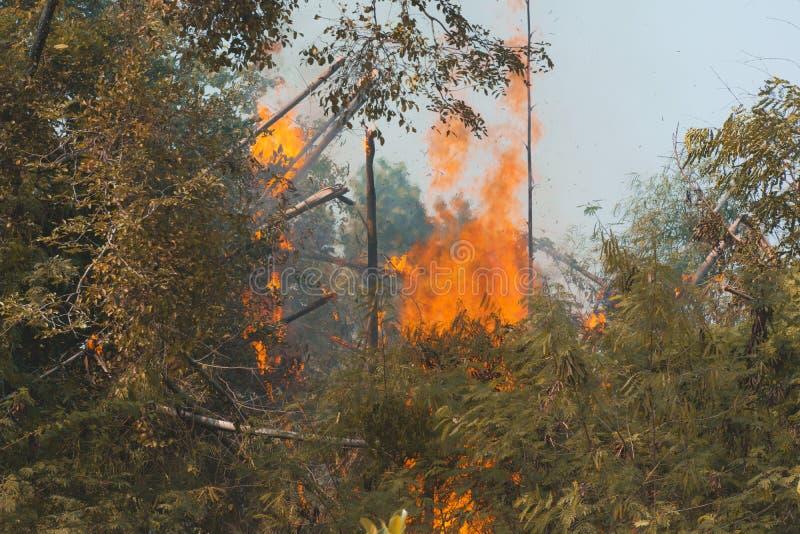 Pożaru płonący drzewo w czerwieni i pomarańczowym kolorze przy dniem obrazy royalty free