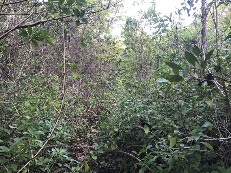 Po środku dżungli obrazy stock