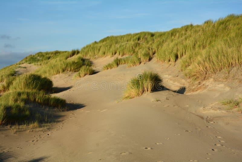 Po środku piasek diun z diuny trawą na Północnym morzu fotografia stock