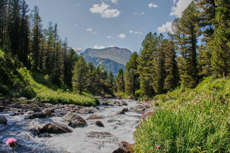 Po powodzi halna rzeka Altai, Syberia obrazy royalty free