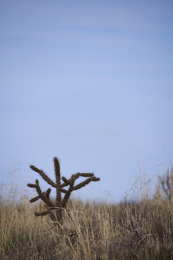 Po?udniowy zach?d pustyni krajobraz zdjęcie stock