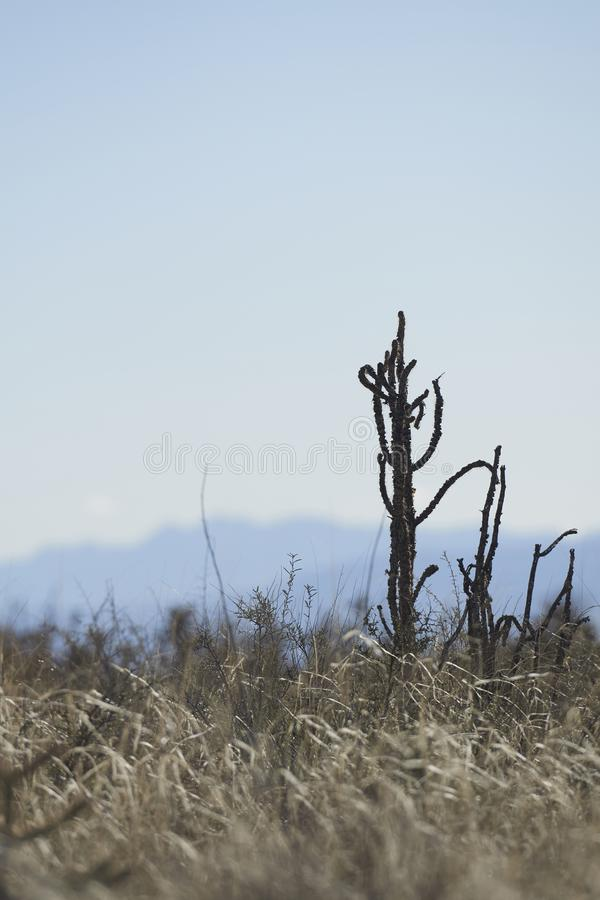 Po?udniowy zach?d pustyni krajobraz fotografia royalty free