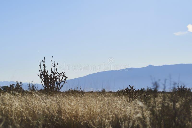 Po?udniowy zach?d pustyni krajobraz fotografia stock
