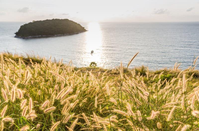 Poaceae pod zmierzchem i morzem zdjęcia stock