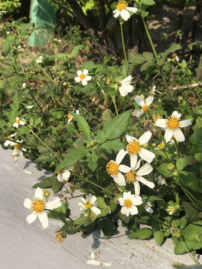 Pobocze kwiat fotografia stock