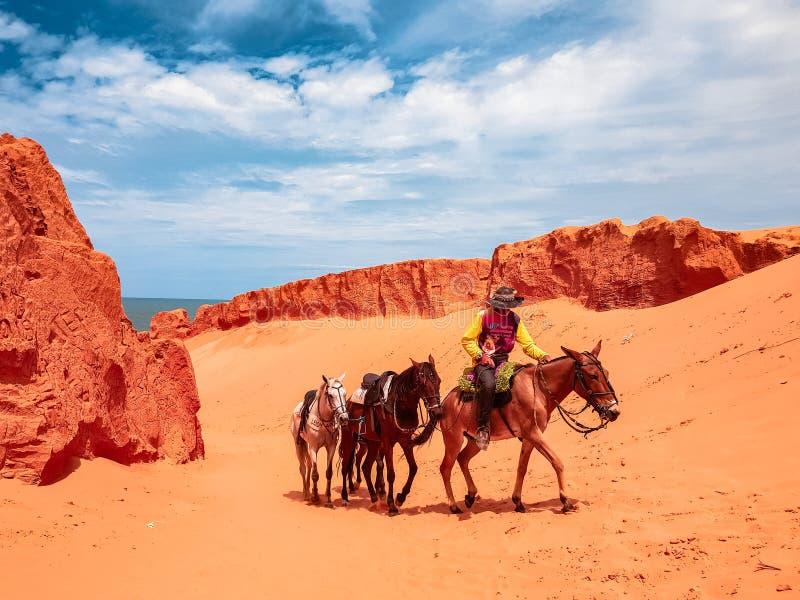 Pobre homem da exploração agrícola de Fortaleza Ceara Brasil A com cavalos fotos de stock royalty free
