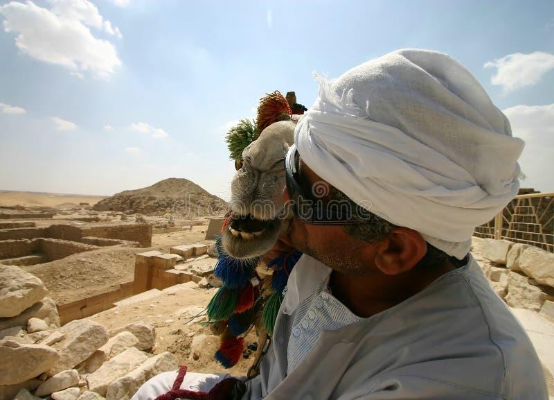 pocałunek wielbłądów fotografia stock
